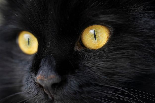 Close-up gezicht van een zwarte kat met gele ogen met smalle pupillen.