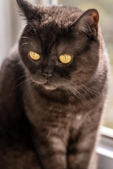 Close-up gezicht van schattige zwarte kat met gele ogen