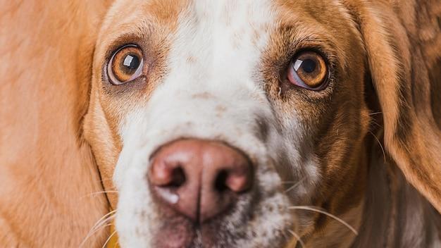 Close-up grappig gezicht van mooie hond