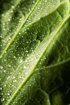 Close-up groen blad met waterdruppeltjes