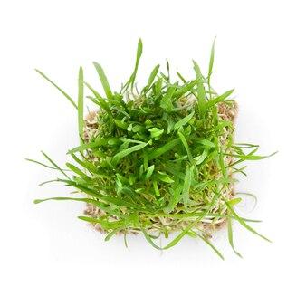 Close-up groen gras met wortels geïsoleerd op wit