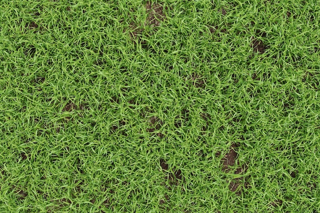 Close-up groen gras textuur achtergrond