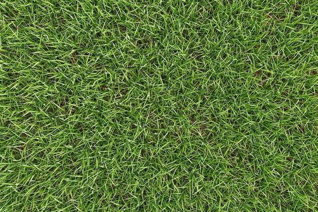 Close-up groen gras textuur achtergrond Premium Foto