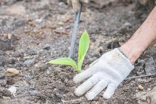 Close-up groen jong boompje op grondachtergrond