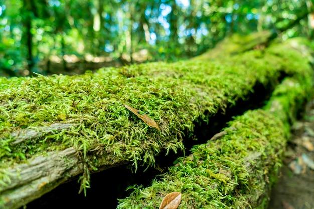 Close-up groen mos op boom in het bos