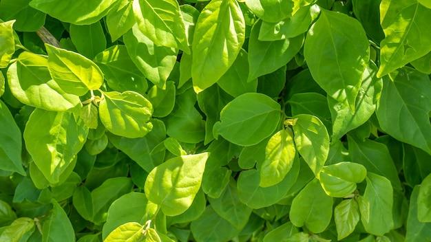 Close-up groene bladeren in de zonnige dag