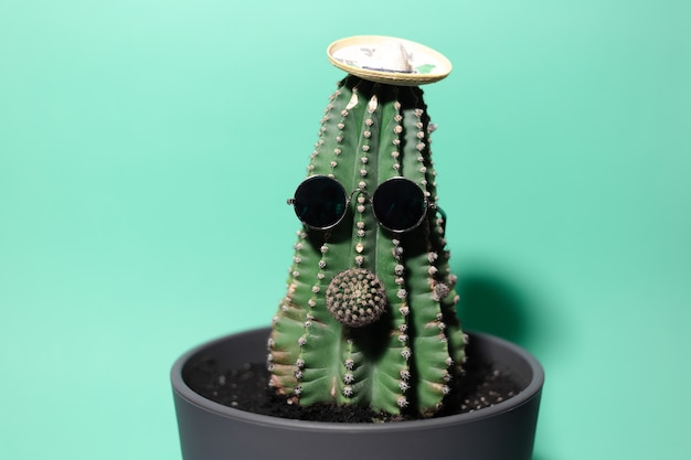 Close-up groene cactus met neus, mexicaanse hoed en zonnebril, geïsoleerd op de muur van aqua menthe kleur.