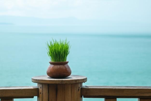 Close-up groene wheatgrass in pot op houten lijst bij het terras