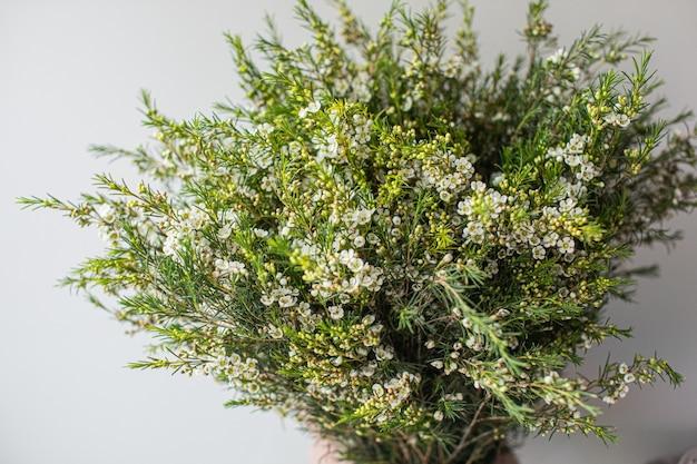 Close-up groot mooi boeket van witte waxflower. bloemachtergrond en behang. bloemen winkelconcept. mooi vers gesneden boeket. bloemen bezorgen.