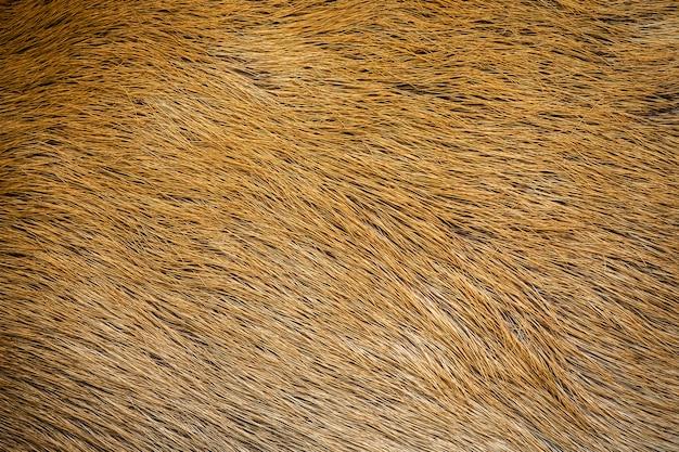 Close-up haar van herten