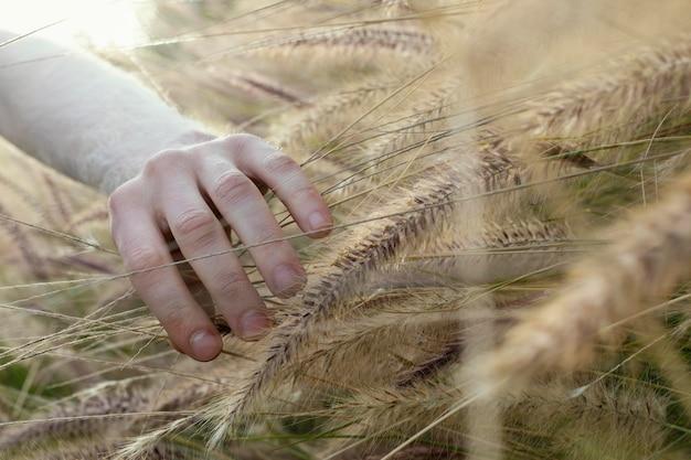Close-up hand aanraken van plant