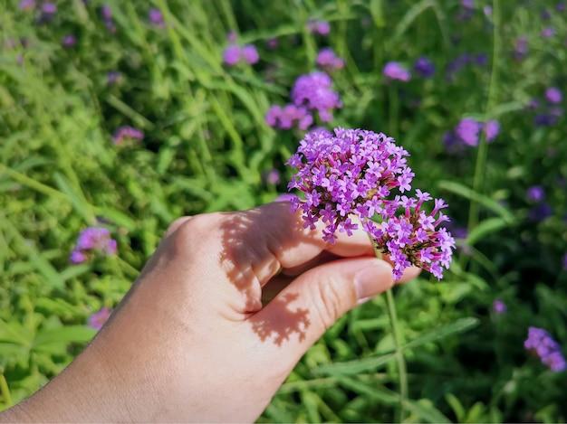 Close-up hand plukken paars bloeiende plant met selectieve aandacht