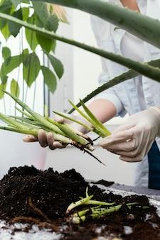 Close-up handen met planten