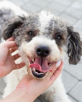 Close-up handen schattige hond aan te raken