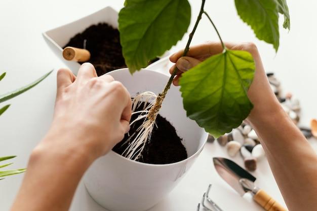 Close-up handen tuinieren plant