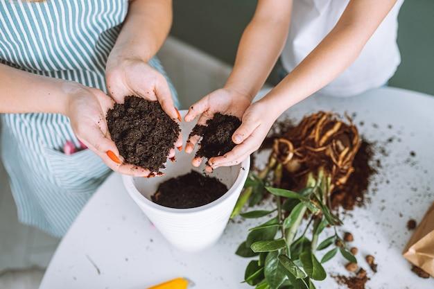 Close-up handen van moeder en dochter plant verplanten. onherkenbare familie zette aarde in witte pot. tuinieren, saamhorigheid.