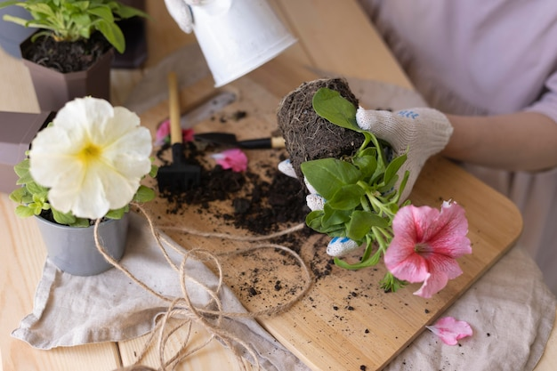 Close-up handen verzorgen van plant
