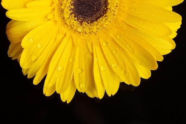 Close-up helft van gerbera daisy