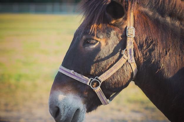 Close-up het hoofd van ezel in de ranch en het ochtendzonlicht.