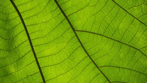 Close-up hoek blad patroon vintage achtergrond groene bladeren natuur selecteer een specifieke focus