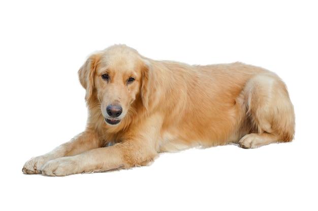Close-up hond detail geïsoleerd huisdier
