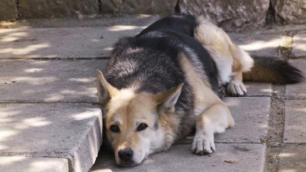 Close-up hond lui op de grond