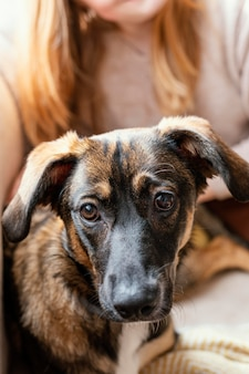Close-up hond zittend op de eigenaar