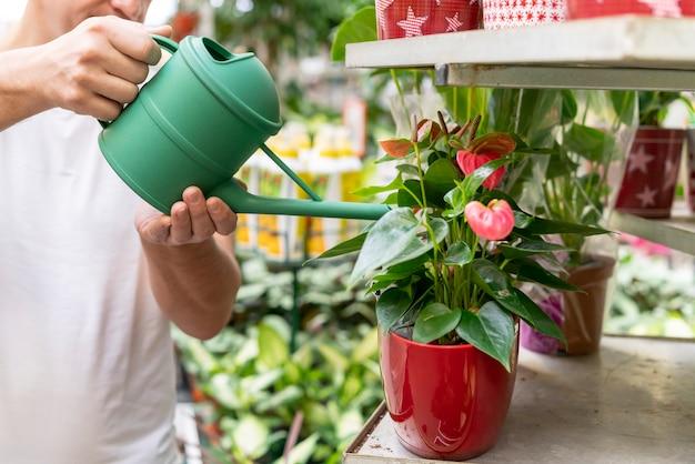 Close-up individuele planten water geven