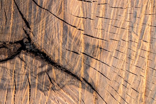 Close-up jaarringen, dwarsdoorsnede van de boomstam.
