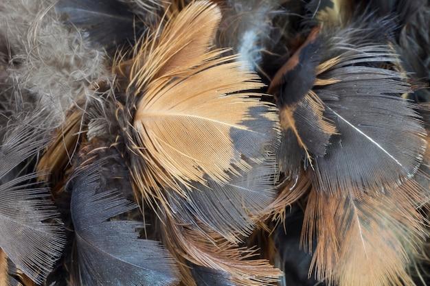 Close-up kip veer textuur voor background