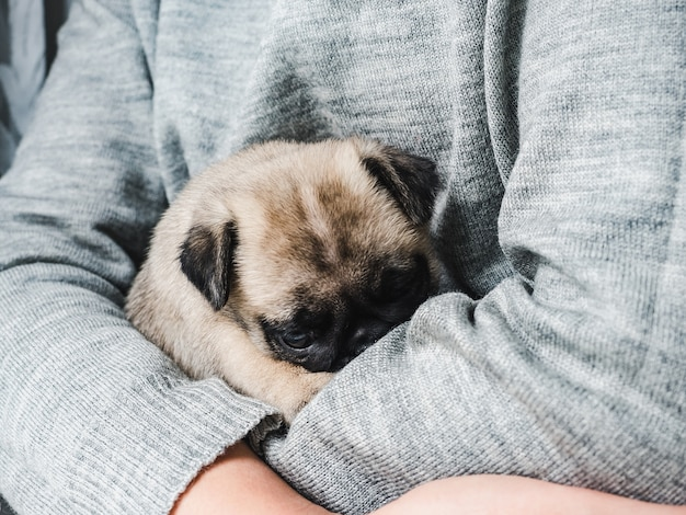 Close-up klein in de armen van de eigenaar