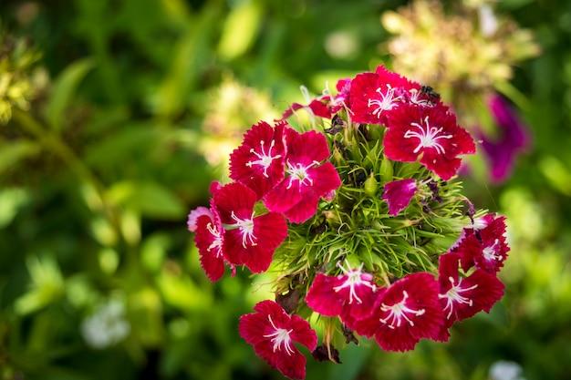 Close-up kleine roze bloem