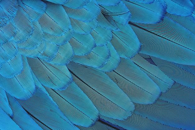 Close-up kleurrijk blauw veerpatroon luxe patroon