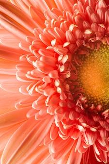 Close-up koraalkleurige plant