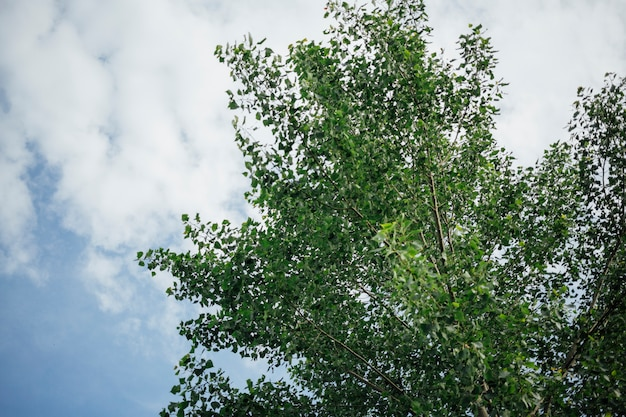 Close-up lage hoekmening van boom boven