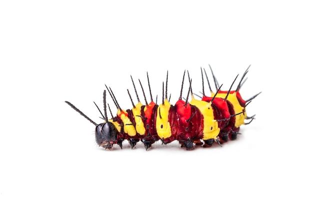 Close-up larve van rups geïsoleerd op een witte achtergrond