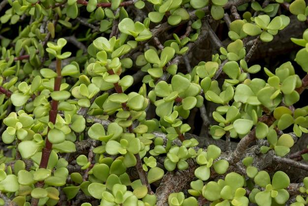 Close-up levendig botanisch concept
