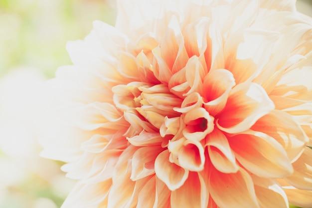Close-up macro bloem