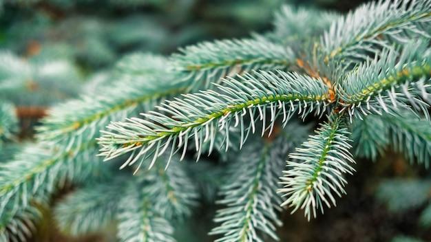 Close-up macroweergave van dennenboomtakken
