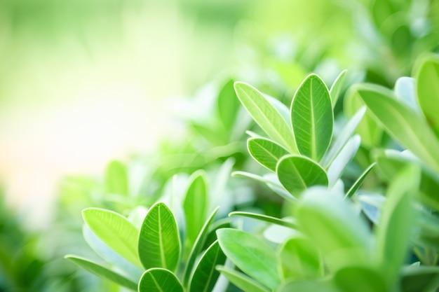 Close-up mooie aantrekkelijke natuur uitzicht op groen blad op wazig groen