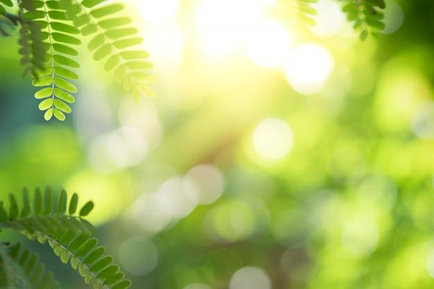 Close-up mooie mening van aard groen blad op groen vage achtergrond met zonlicht en exemplaarruimte.