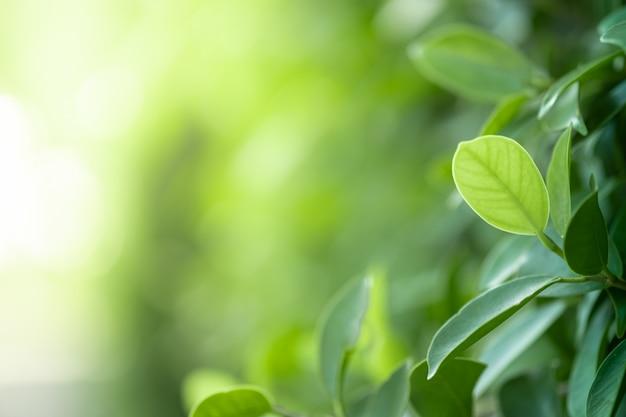 Close-up mooie mening van aard groene bladeren op de vage achtergrond van de groenboom met zonlicht in openbaar tuinpark. het is landschapsecologie en kopieer ruimte voor behang en achtergrond.