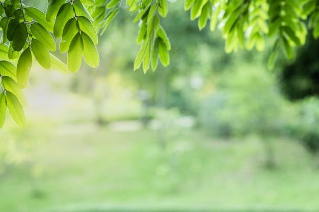 Close-up mooie mening van aard groene bladeren op de vage achtergrond van de groenboom met zonlicht in openbaar tuinpark.