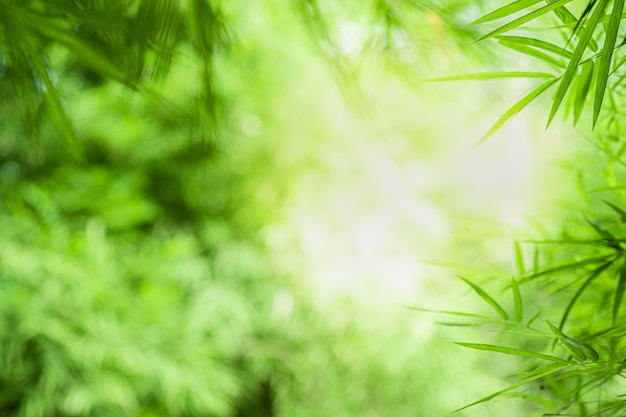Close-up mooie mening van blad van het aard het groene bamboe op groen vage achtergrond met zonlicht en copyspace