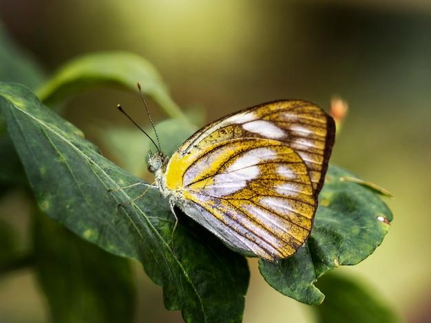 Close-up mooie vlinder in moestuin