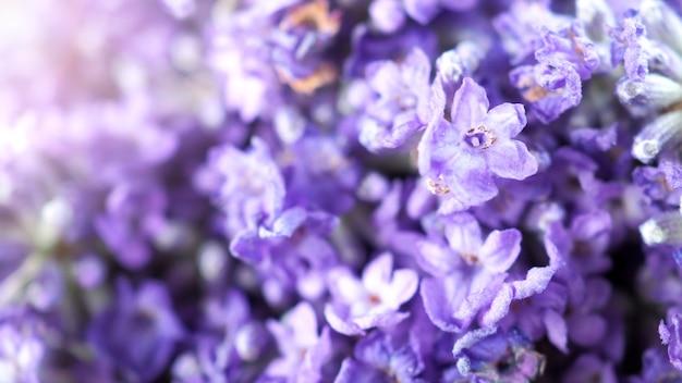 Close-up of macro-afbeeldingen van japan lavendel boeket bos die frisheid kleurrijk bloeiend