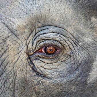 Close-up olifant oog textuur achtergrond