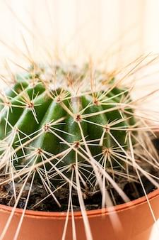 Close-up om cactus met lange doornen in bruine bloempot.