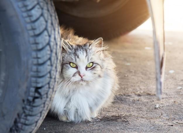 Close-up op dakloze kat op straat
