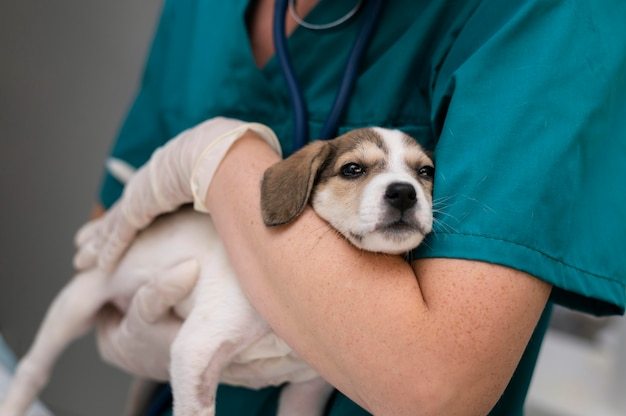 Close-up op dierenarts die voor hond zorgt